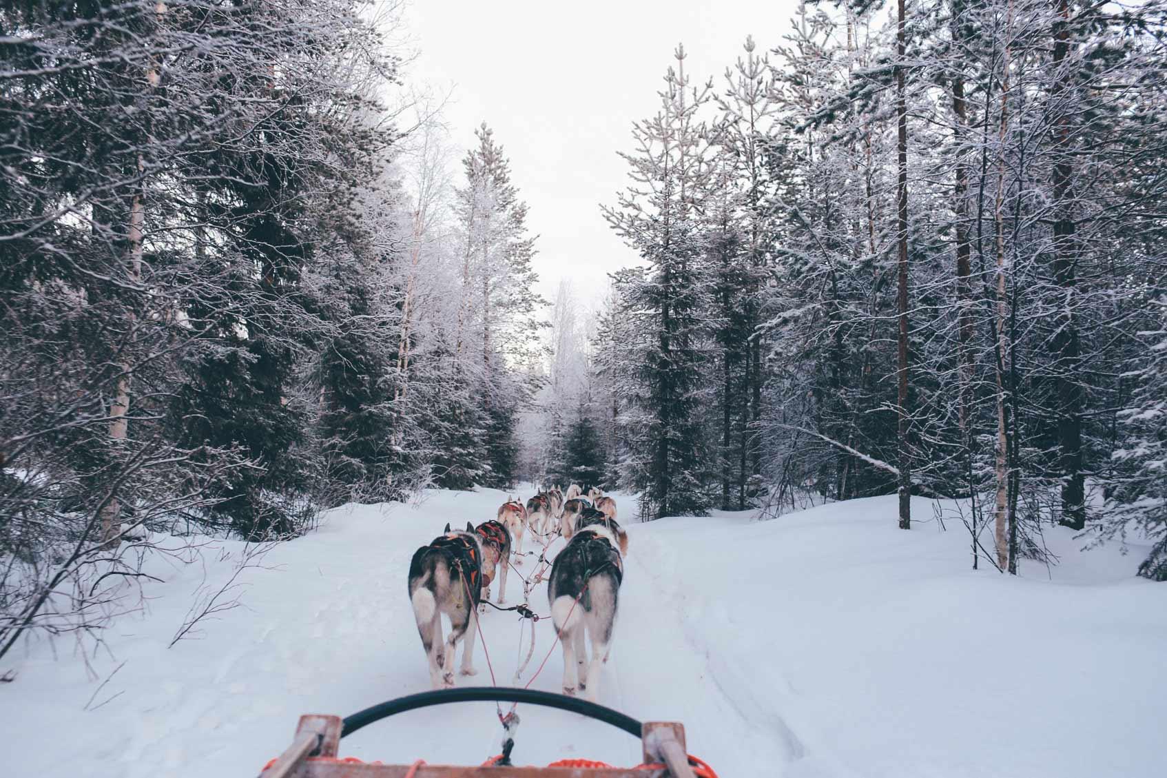 зимняя упряжка с собаками