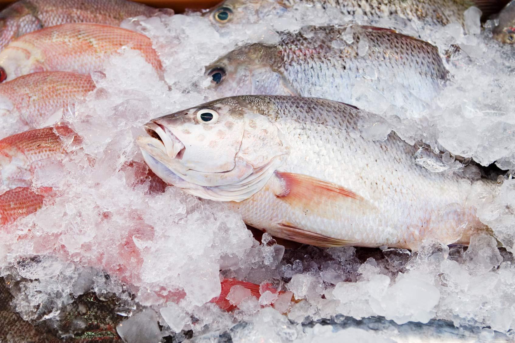 где купить свежую рыбу в Москве