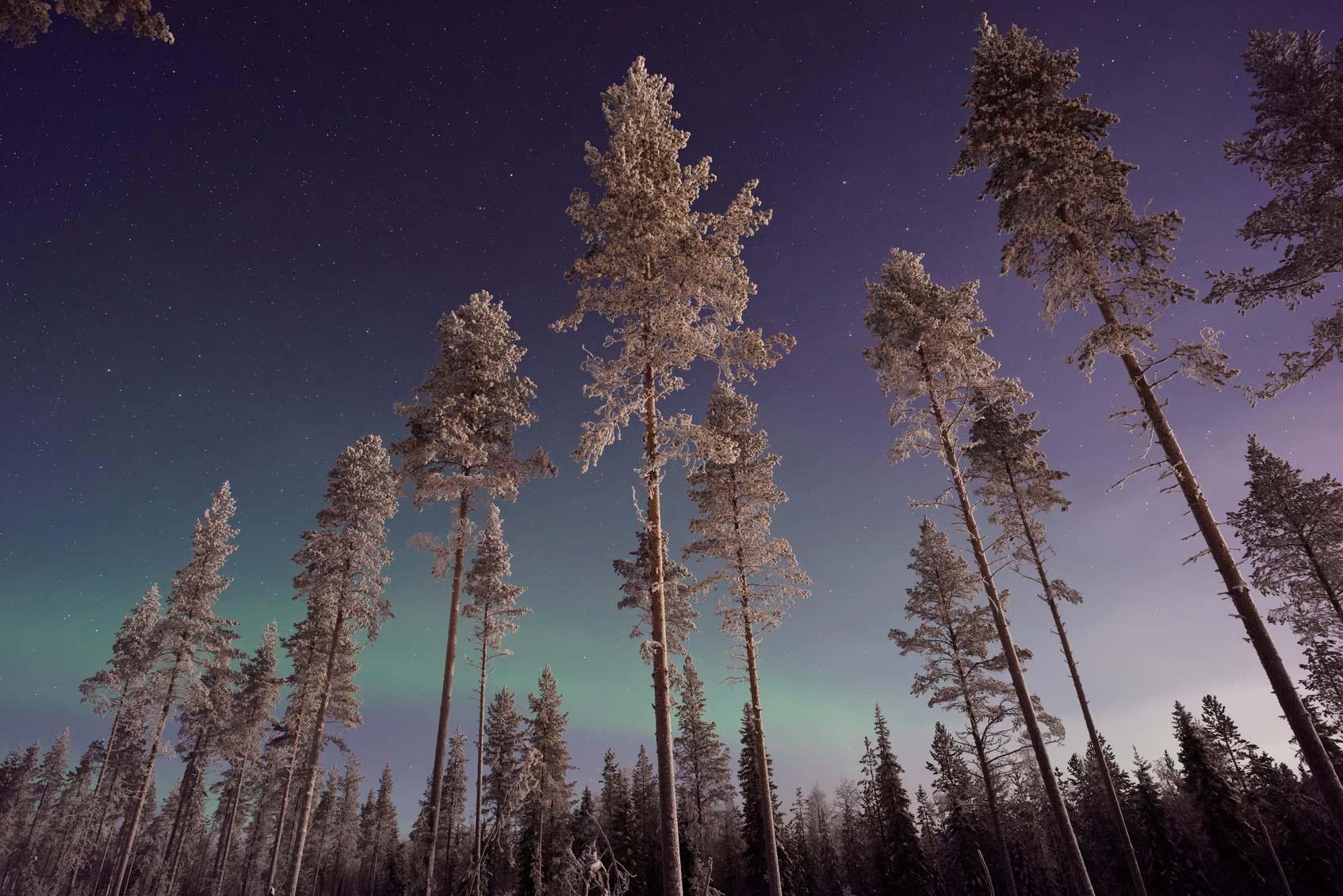 снежный лес Финляндия