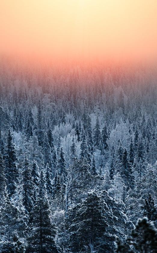 лес Финляндия деревья