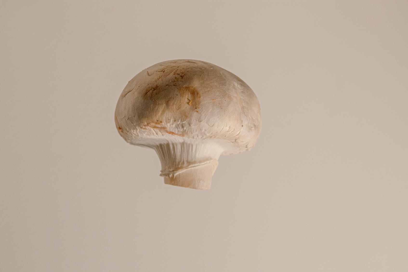 полезные грибы шиитаке шампиньон