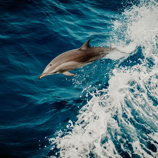 скорая помощь для дельфинов