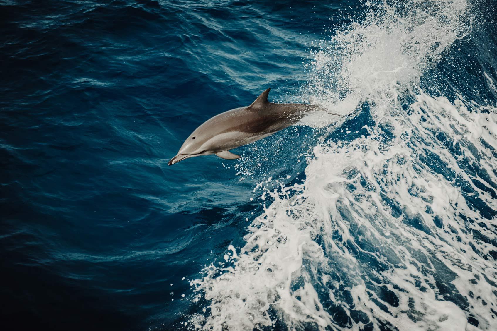 скорая помощь для дельфинов в крыму