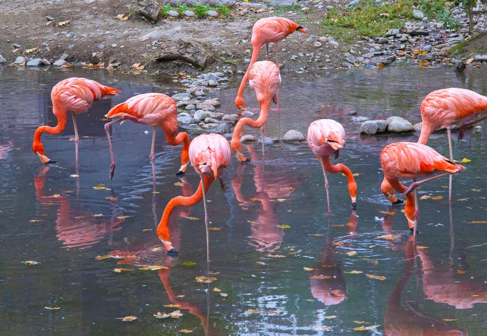 казахстан фламинго