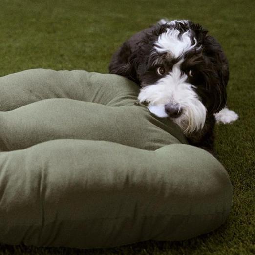 У Zara появились одежда и аксессуары для собак