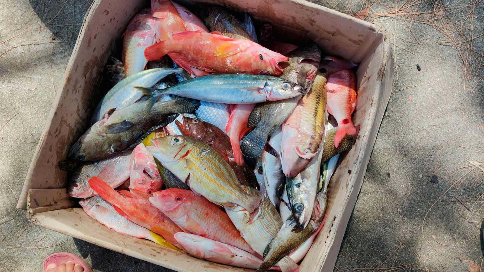 рыбные рестораны на сейшельских островах
