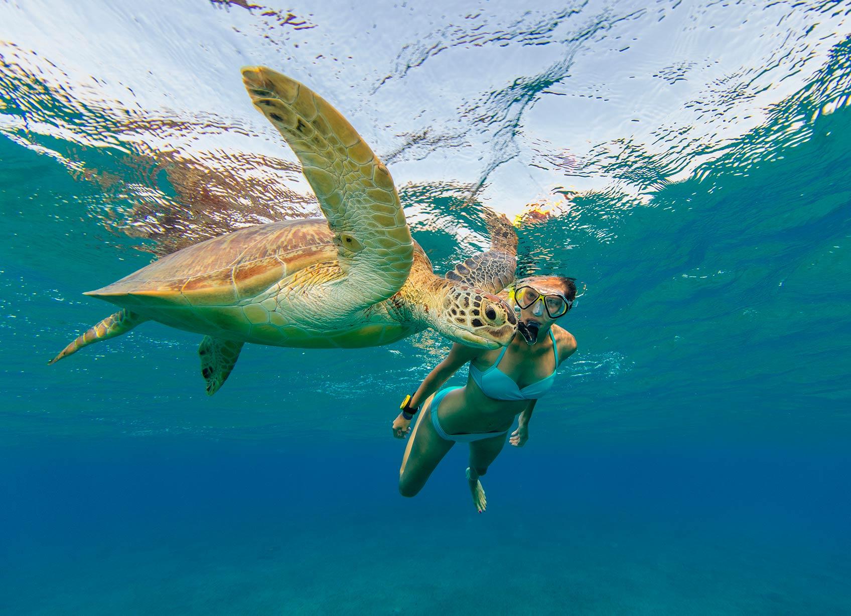 морские обитатели сейшельских островов