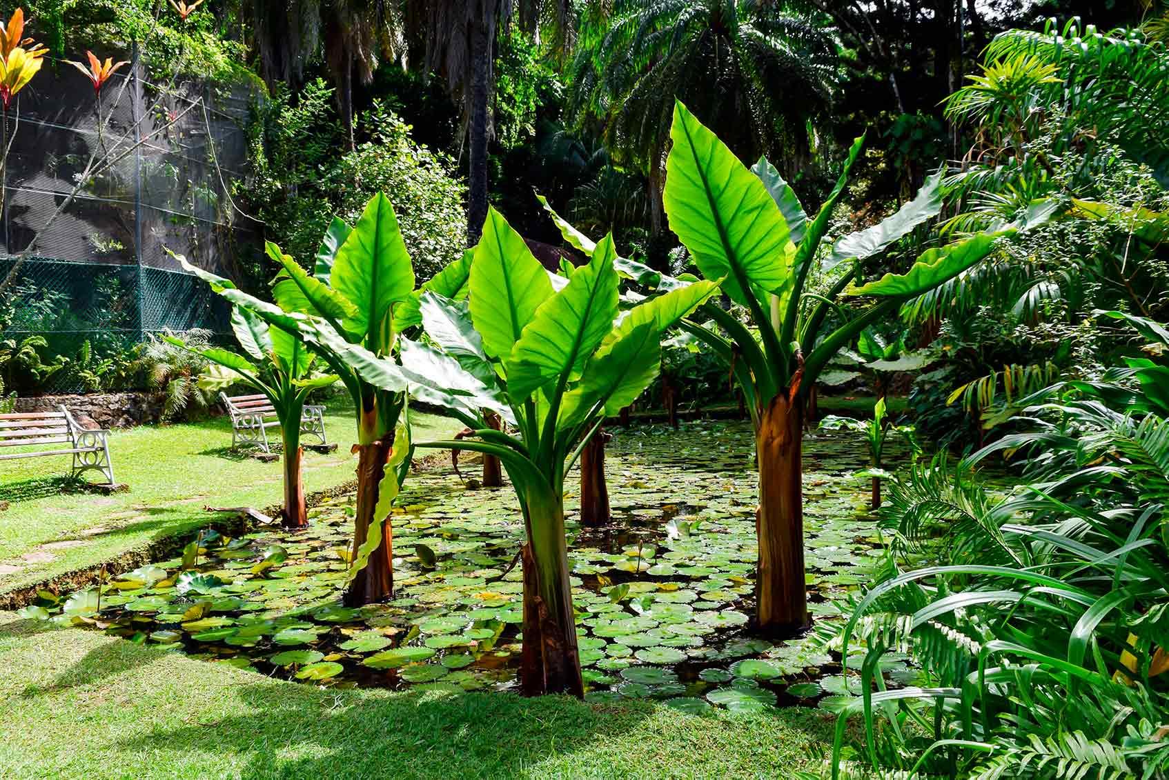 Ботанический сад Виктории на сейшелах