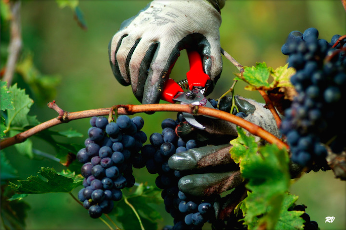 Винодельня Val Delle Corti