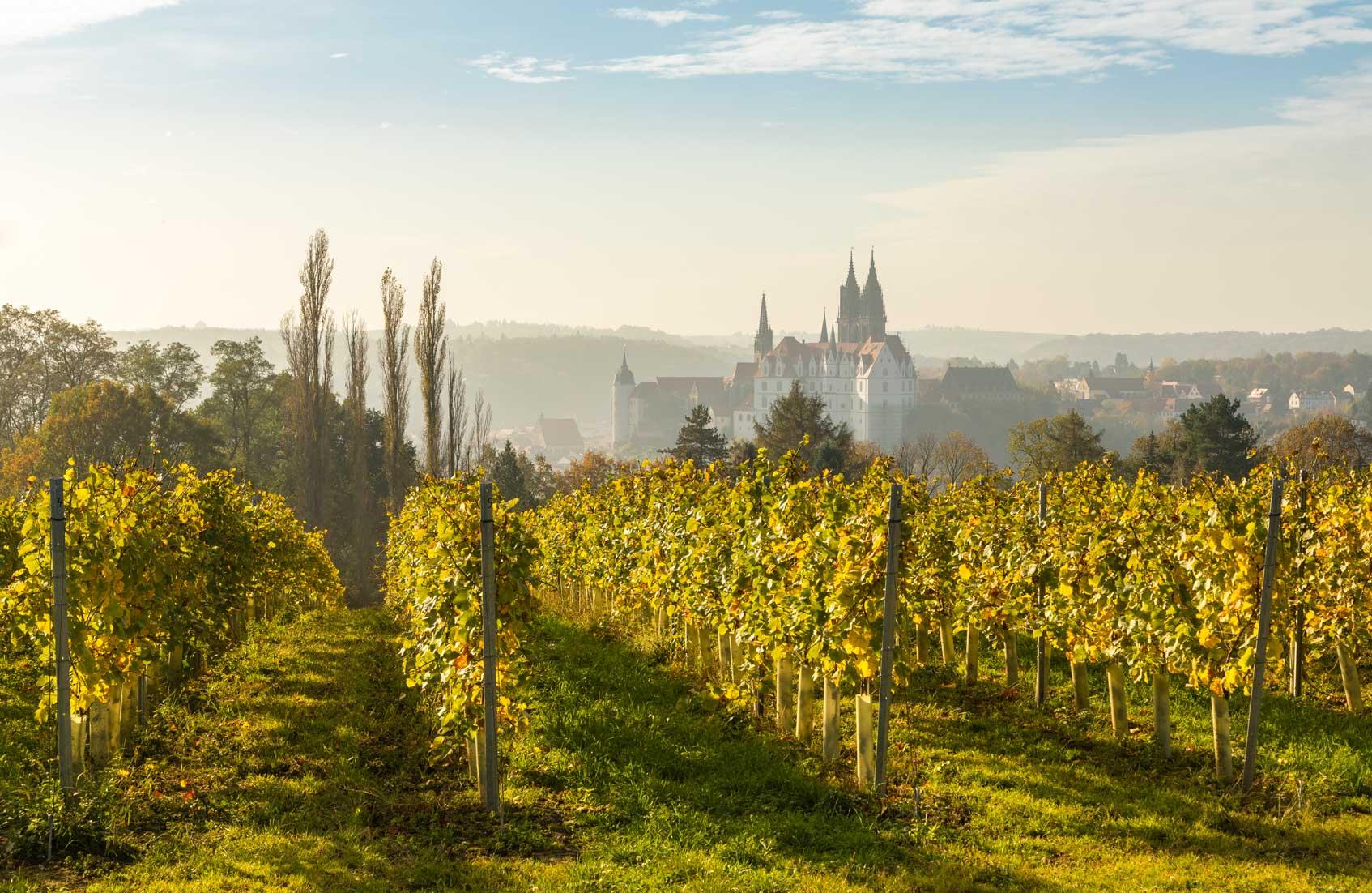 виноградники саксонии
